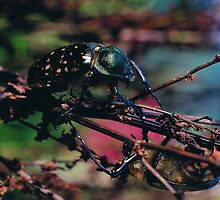 Black Bug by rogierman