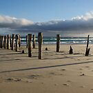 Old Jetty Beams, St Clair Beach, Dunedin, 5 by DeliaA