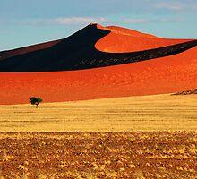 Desert Dunes by Jill Fisher