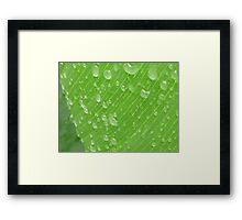green rain dops Framed Print
