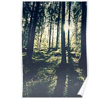 Sunlight in the woods 2 Poster