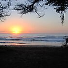 Sunrise through the trees - Apollo Bay, Victoria by Heather Samsa