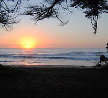 Sunrise through the trees - Apollo Bay, Victoria by Heather Samsa
