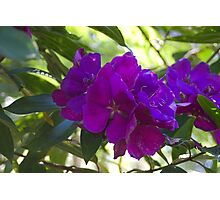 Flowers - Purple Photographic Print