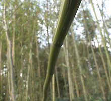 bamboo thicket by ladybug-zen
