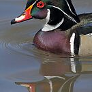 Wood duck up close by Rob Lavoie