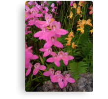 Mixed Glasgow Orchids Canvas Print