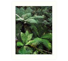 Rainforest, Mount Donna Buang, Victoria, Australia Art Print