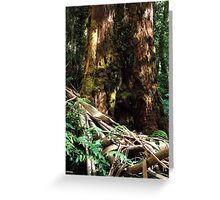 Huge Eucalyptus and Ribbons of Bark_Rainforest Walk, Mount Donna Buang Greeting Card