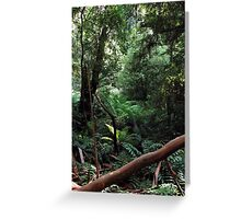 Rainforest, Mount Donna Buang, Victoria, Australia Greeting Card