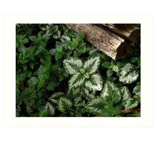 Pretty Plants by the Roadside Art Print