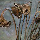 dead sunflowers by Jeremy Wallace