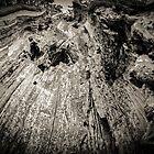 Lightning Struck Tree by MissDawnM
