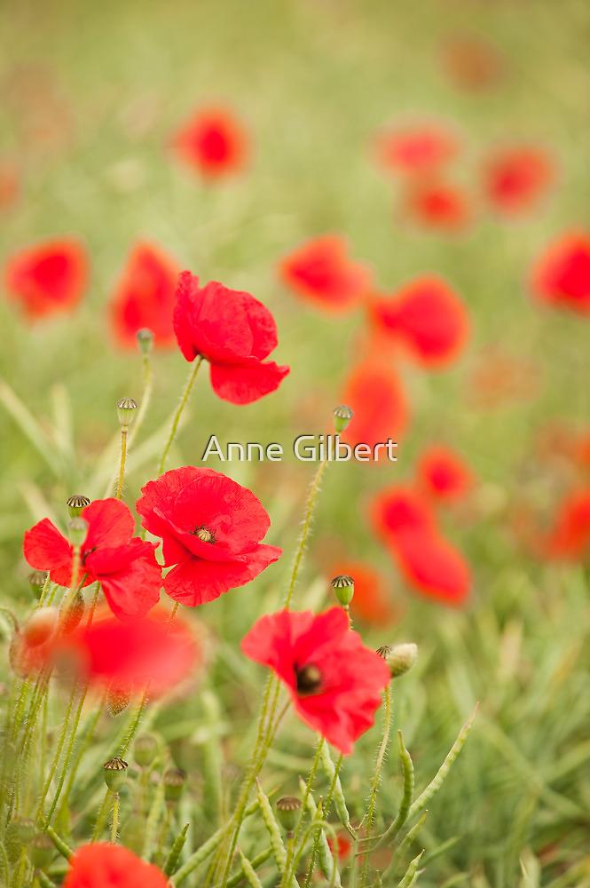Poppy Red by Anne Gilbert