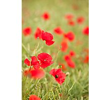Poppy Red Photographic Print