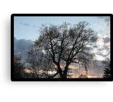Willow tree Canvas Print
