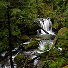 Champion Creek Delight by Charles & Patricia   Harkins ~ Picture Oregon