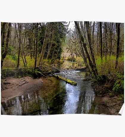 Just A Peek Of Spring ~ Whittaker Creek ~ Poster