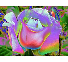 Rose of a Different Color Photographic Print