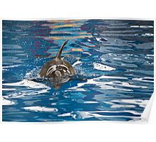 Dolphin Surfacing Poster