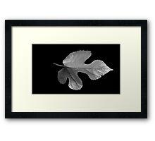 LEAF IN BLACK AND WHITE (2) Framed Print