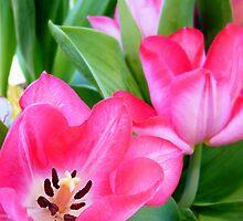 Tulips... by LindaR