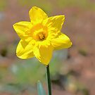 Yellowhead by Imagery