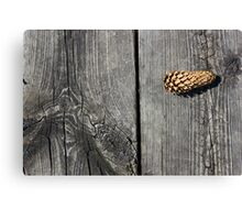 Pine Cone and Old Wood Canvas Print