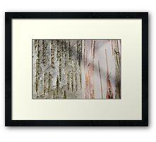 Birch Bark 11 Framed Print