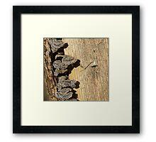 Tree Stump with Fungi Framed Print