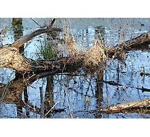 Wetland Reflections 3 Photographic Print