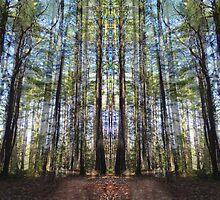 Forest Window by Lynzi Wildheart
