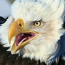 Talking Eagle by Mike Shero