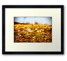 First of the Wild Flowers Framed Print