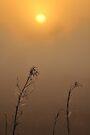 Dry Season, As Is by Kim McClain Gregal