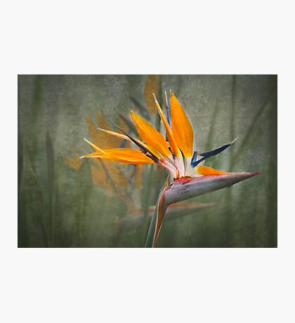 Tropical Song Photographic Print