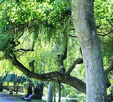 Tree Lined Walk at Sidford , Devon by lynn carter