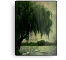 My special weeping willow tree © Metal Print