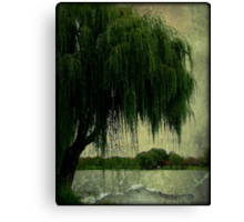 My special weeping willow tree © Canvas Print