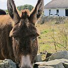Donkey saying Hello! by Honor Kyne