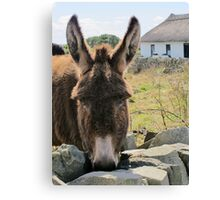 Donkey saying Hello! Canvas Print