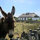 Irish Donkey by Honor Kyne