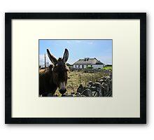 Irish Donkey Framed Print