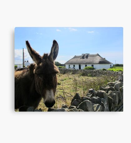 Irish Donkey Canvas Print