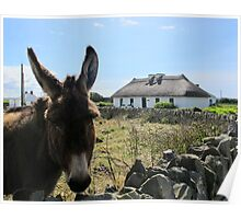 Irish Donkey Poster