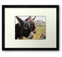Donkies saying hello! Framed Print