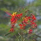 Just a flower by Darakian