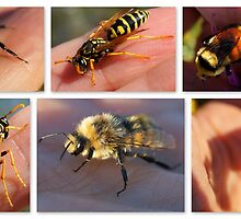 Some of My Favorite Pollinators by Betsy  Seeton