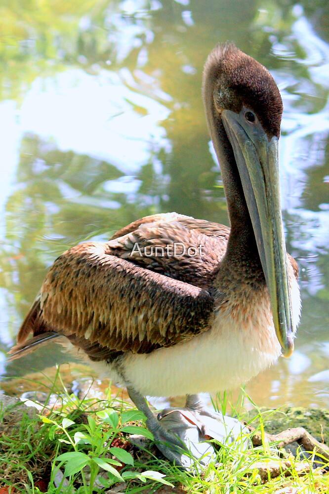 Little Brown Pelican by AuntDot
