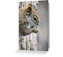 Seriously...do you have to watch me eat? Greeting Card